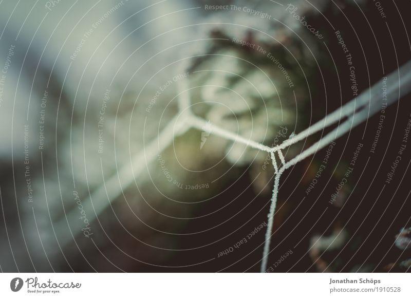 Eisige Spinnweben VIII Winter Natur Pflanze Herbst Nebel Traurigkeit kalt Trauer Einsamkeit Vergänglichkeit Frost Jahreszeiten Netz Neigung
