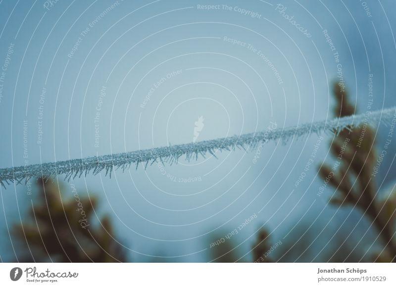 Väterchen Frost III Winter Natur Pflanze Herbst Nebel Traurigkeit kalt blau Trauer Einsamkeit Vergänglichkeit Erfurt Jahreszeiten Spinngewebe Spinnennetz