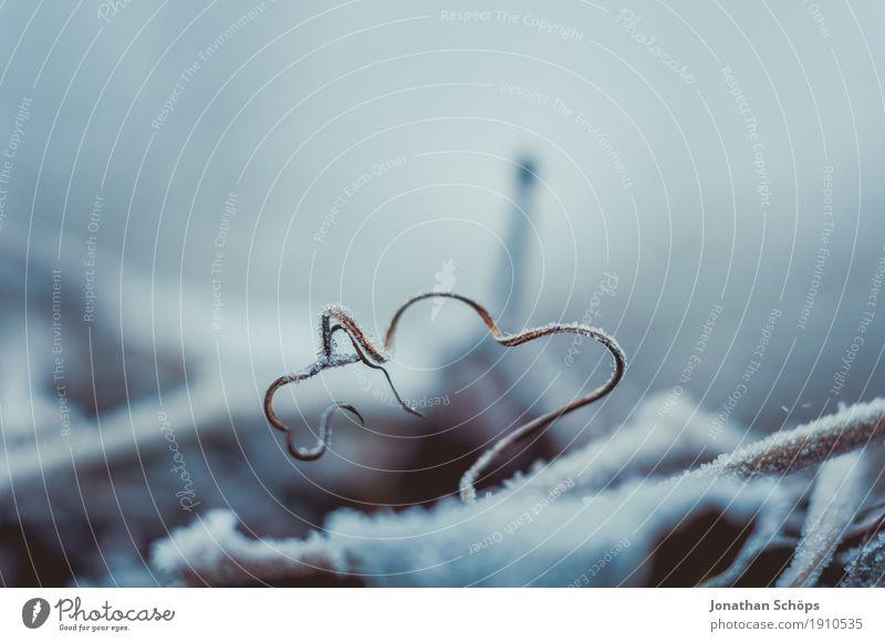 Väterchen Frost X Natur Pflanze Einsamkeit Winter kalt Traurigkeit Herbst Schnee Nebel Eis Vergänglichkeit Trauer Jahreszeiten Zaun Spirale