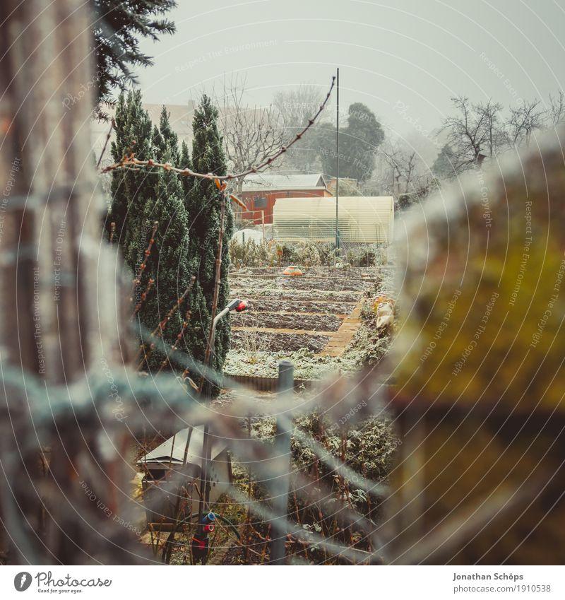 Väterchen Frost VII Natur Pflanze Einsamkeit Winter kalt Traurigkeit Herbst Garten Nebel Vergänglichkeit Trauer Jahreszeiten Zaun Bioprodukte ökologisch