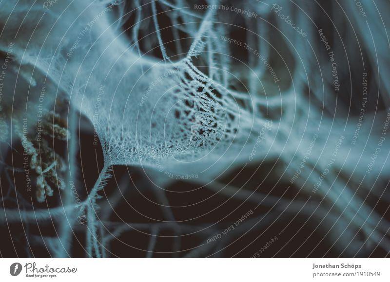 Eisige Spinnweben III Winter Natur Pflanze Herbst Nebel Traurigkeit kalt Sorge Trauer Unlust Schmerz Einsamkeit Trägheit falsch uneinig Vergänglichkeit Erfurt