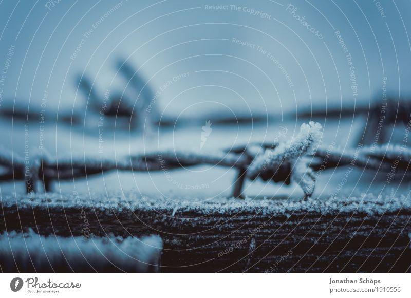 Väterchen Frost XI Natur Pflanze Einsamkeit Winter kalt Traurigkeit Herbst Tod Nebel Angst Vergänglichkeit bedrohlich Trauer Jahreszeiten Scharfer Gegenstand
