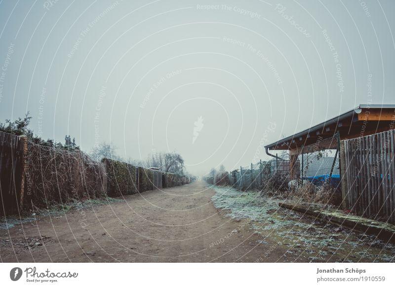 Väterchen Frost VI Winter Natur Pflanze Herbst Nebel Traurigkeit kalt Trauer Sehnsucht Fernweh Einsamkeit Zufriedenheit stagnierend Vergänglichkeit Erfurt