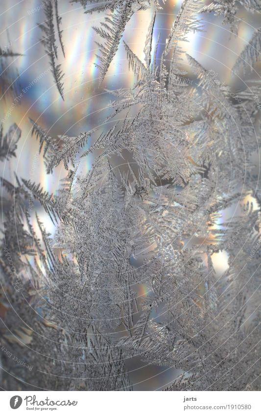 eiskalt Winter Schönes Wetter Eis Frost Glas frisch natürlich Natur Eisblumen Eiskristall Glaskugel Farbfoto mehrfarbig Außenaufnahme Nahaufnahme Detailaufnahme