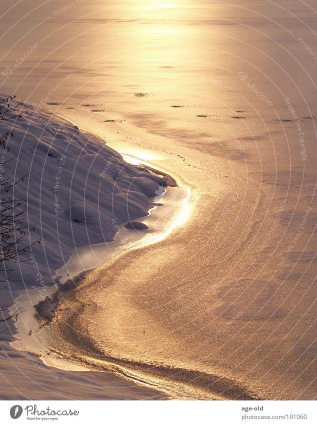 Lake of gold Wasser weiß Winter ruhig gelb Schnee Erholung Landschaft Eis Zufriedenheit Stimmung braun Umwelt Erde ästhetisch