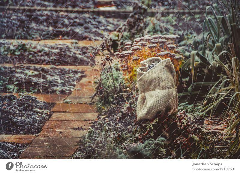 Väterchen Frost IV Winter Garten Natur Pflanze Herbst Nebel Blume Wege & Pfade Traurigkeit kalt Trauer Einsamkeit Vergänglichkeit Erfurt Jahreszeiten Beet