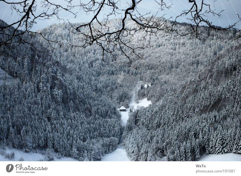 lonesome boor Natur Landschaft Pflanze Winter Schnee Baum Wald Berge u. Gebirge Ferne natürlich schwarz weiß ruhig träumen Sehnsucht Einsamkeit
