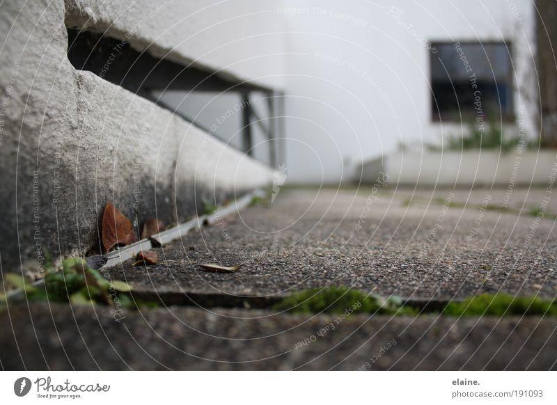 ausschnitthaft.villa savoye. grün weiß ruhig Haus Fenster schwarz Wand Architektur Gebäude Mauer grau Stein braun Metall Design modern