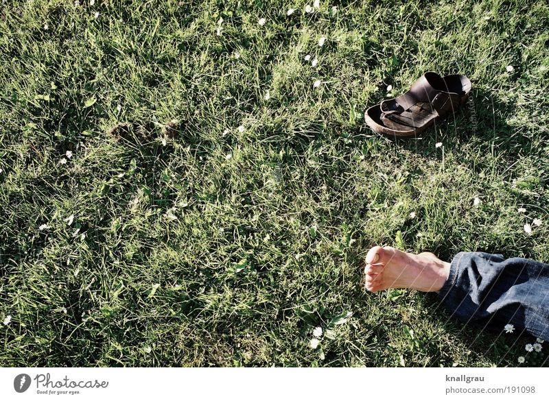 Frei-Fuß-Kultur Lifestyle Freude Mensch maskulin 1 liegen Freizeit & Hobby Sandale Pause Erholung Rasen Gänseblümchen Jeanshose Park Freiheit atmen Zehen grün