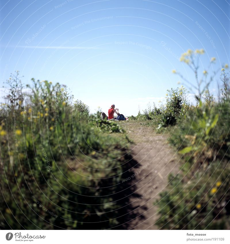 Natur blau grün Pflanze Ferien & Urlaub & Reisen Sommer ruhig Ferne Wiese Umwelt Freiheit Park sitzen Ausflug natürlich Flugzeug