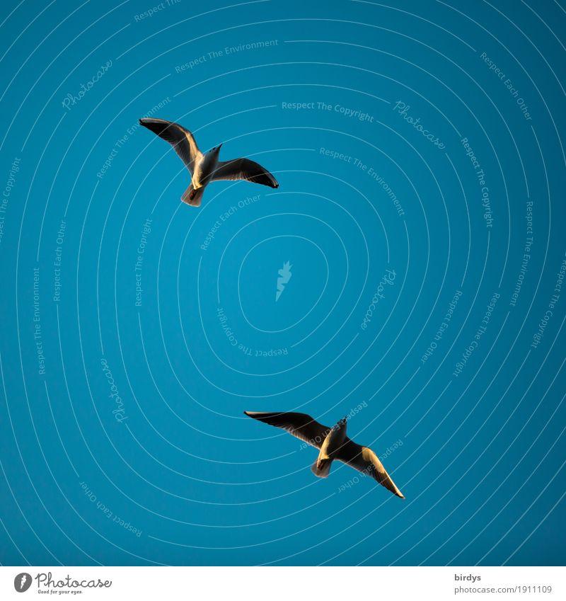Paarflug Natur blau Farbe Tier Leben Bewegung Vogel fliegen Freundschaft frei Tierpaar Wildtier ästhetisch Lebensfreude einfach rein