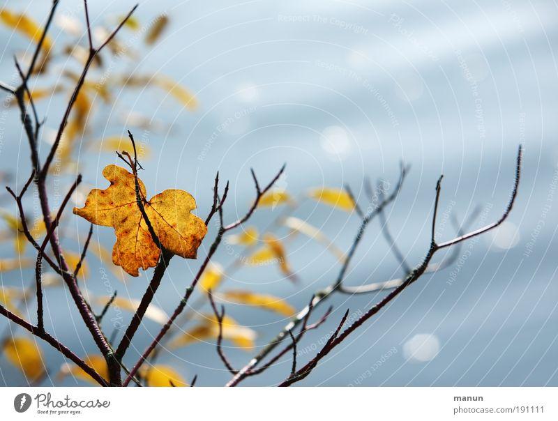 Halt geben Natur Baum Blatt Einsamkeit ruhig Erholung Tod Leben Herbst Park Zufriedenheit Idylle Schönes Wetter Ast Seeufer