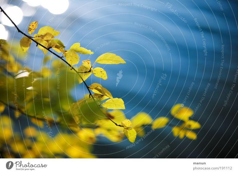 oktobergelb Natur blau Wasser Erholung Blatt ruhig gelb Leben Herbst Park Zufriedenheit Sträucher Lebensfreude Schönes Wetter Pause Seeufer