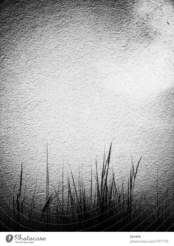 Wand und Licht weiß Pflanze Sommer ruhig schwarz Einsamkeit Haus Erholung Gefühle grau Gras Stil Sand Stein Mauer