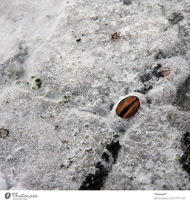 frozen Winter Eis Frost Eichel frieren fest kalt natürlich braun weiß eingeschlossen gefroren Frucht glatt Wetter Farbfoto Außenaufnahme Menschenleer