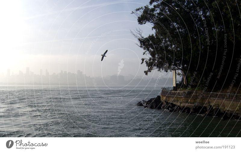 San Francisco Idyll Natur Wasser schön Stadt Baum Meer Tier ruhig Wand Freiheit Küste Mauer Vogel fliegen Insel Flügel