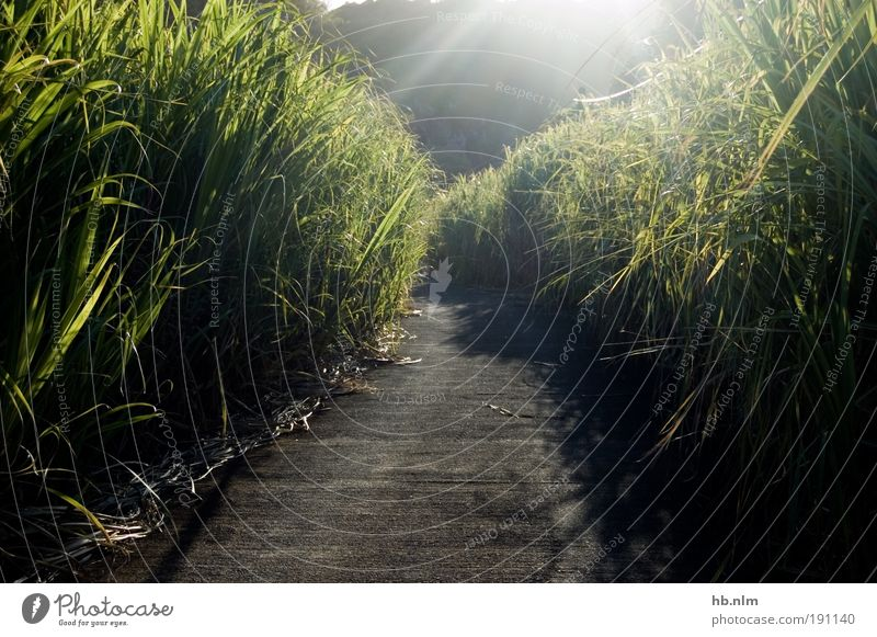 le chemin weiß grün Pflanze Ferien & Urlaub & Reisen ruhig Einsamkeit schwarz Straße Wiese Landschaft Umwelt träumen Stimmung hell Feld ästhetisch