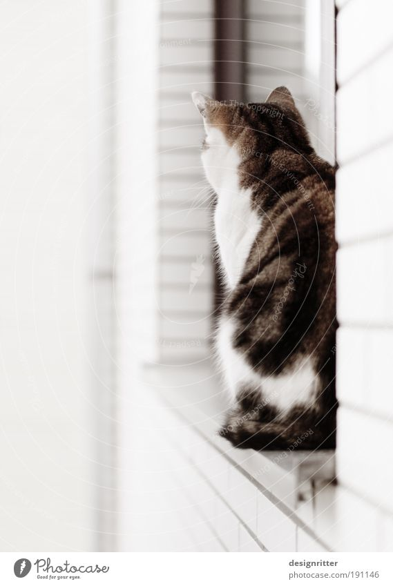 sit and wait schön ruhig Einsamkeit Tier Wand Fenster träumen Traurigkeit Mauer Katze warten sitzen ästhetisch weich beobachten Vertrauen