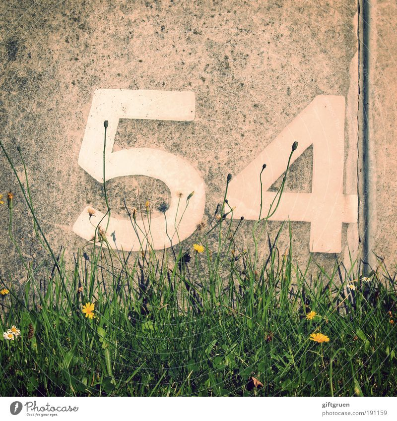 xenon Pflanze Blume Gras Ordnung 54 vierundfünfzig Mauer Beton Betonwand Nummer Ziffern & Zahlen Beschriftung Aufschrift ordnen Jubiläum Xenon Ordnungszahl