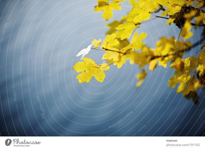 Ruhezone Natur Wasser Baum blau ruhig Blatt gelb Leben Erholung Herbst Tod träumen Park Zufriedenheit Trauer Frieden