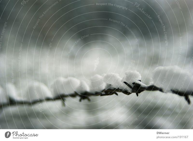 Zaungast Natur Winter ruhig Wolken kalt Schnee Freiheit grau Landschaft Eis Metall Feld Nebel Wetter elegant