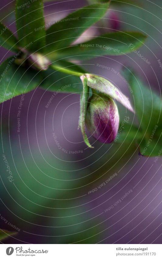 lila Natur schön grün Pflanze ruhig Farbe Blüte Umwelt ästhetisch Wachstum violett wild natürlich Idylle Blühend Duft