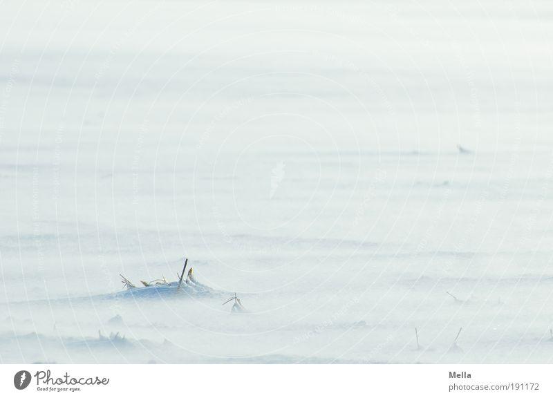 Schneesee Natur weiß Pflanze Winter Ferne kalt Wiese Umwelt Landschaft Gras hell Wetter Eis Erde Feld