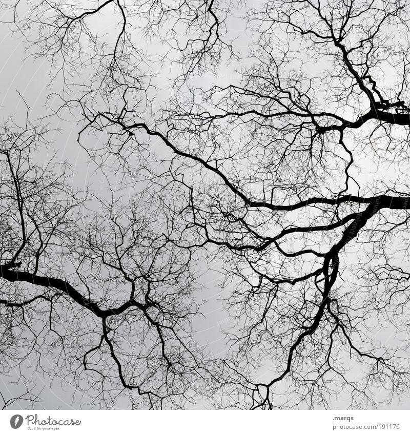 Kahlheinz Natur Himmel Baum Pflanze Winter Wald dunkel kalt Gefühle Holz Landschaft warten groß Trauer Wachstum Blick