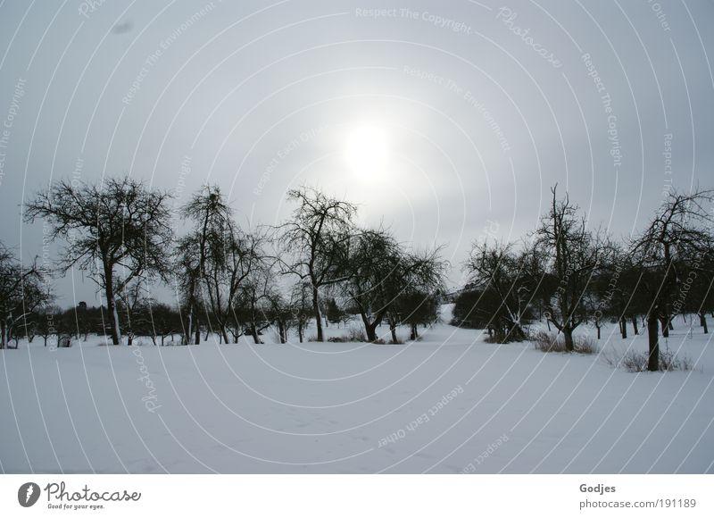 Apfelbäume in einer Schneelandschaft Umwelt Natur Landschaft Himmel Wolken Sonne Sonnenlicht Winter Feld Hügel kalt Stimmung Farbfoto Außenaufnahme Menschenleer
