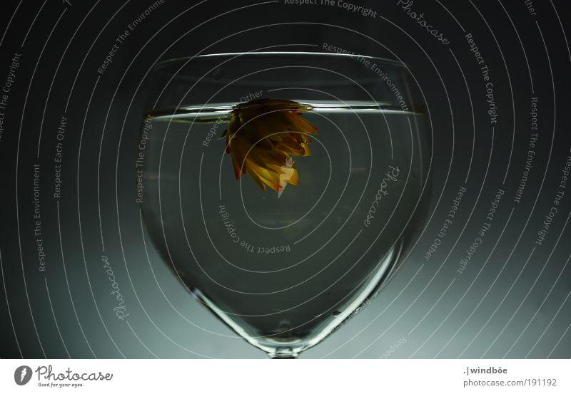 Weinwasservase Natur Pflanze Wasser weiß Erholung Blume rot Einsamkeit schwarz gelb Leben natürlich Schwimmen & Baden Luft Wachstum Glas