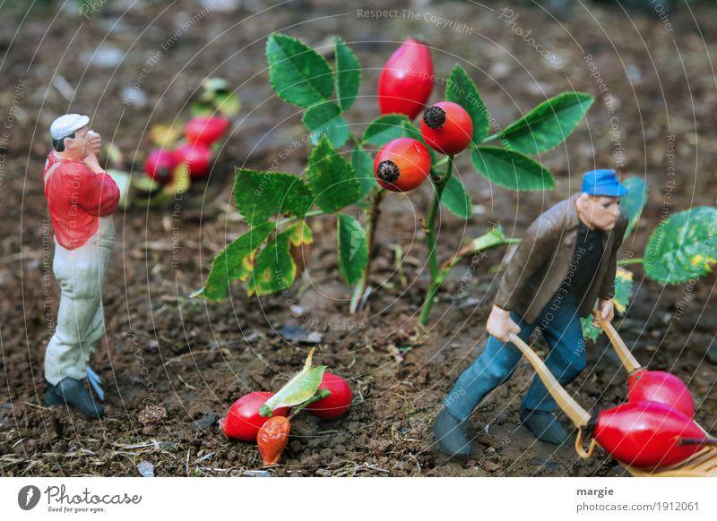 Miniwelten - Hagebuttenernte Gartenarbeit Landwirtschaft Forstwirtschaft Dienstleistungsgewerbe Mensch maskulin Mann Erwachsene 2 Pflanze Baum Blatt Blüte grün