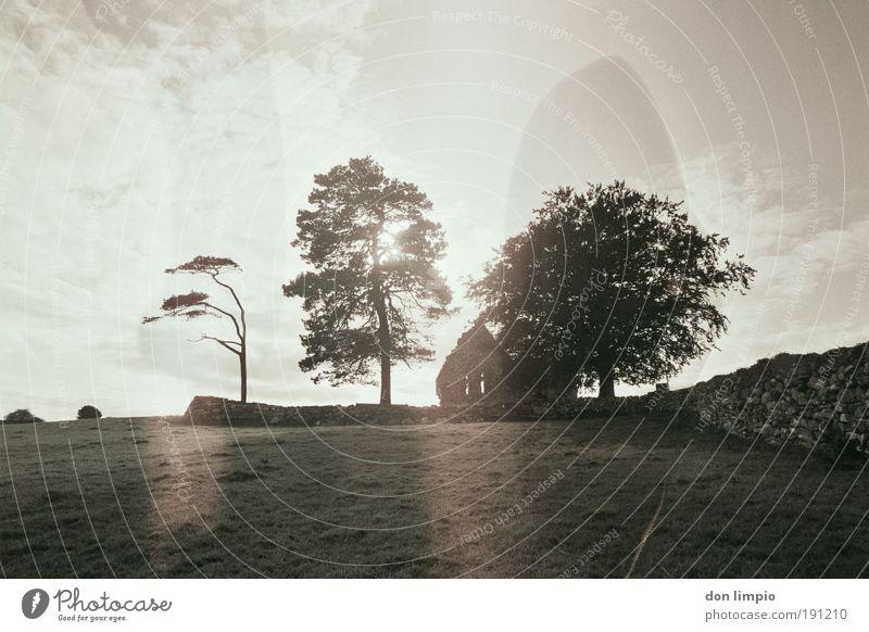 black tea ruhig Sommer Haus Wolken Sonnenlicht Baum Wiese Feld Republik Irland Dorf Menschenleer Ruine Kirche Mauer Wand alt hell nass schwarz weiß Idylle