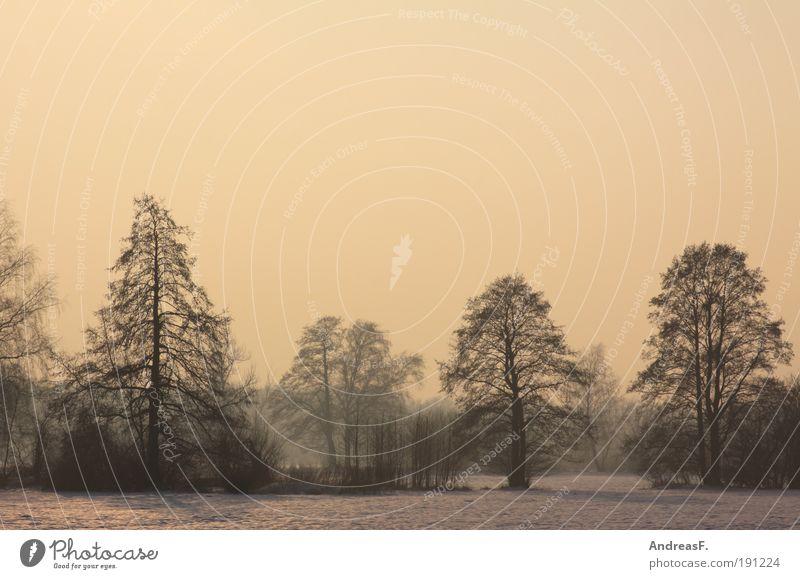 Winterlicht Natur Himmel Baum gelb Wald kalt Schnee Landschaft orange Feld Umwelt gold Schneelandschaft Sonnenaufgang