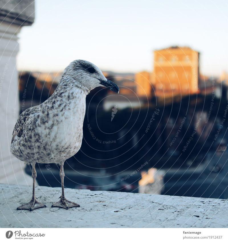 italienische Möwe Natur weiß lustig grau Vogel Stimmung Stadtleben sitzen Feder warten Schönes Wetter Hauptstadt Altstadt Stadtzentrum Rom