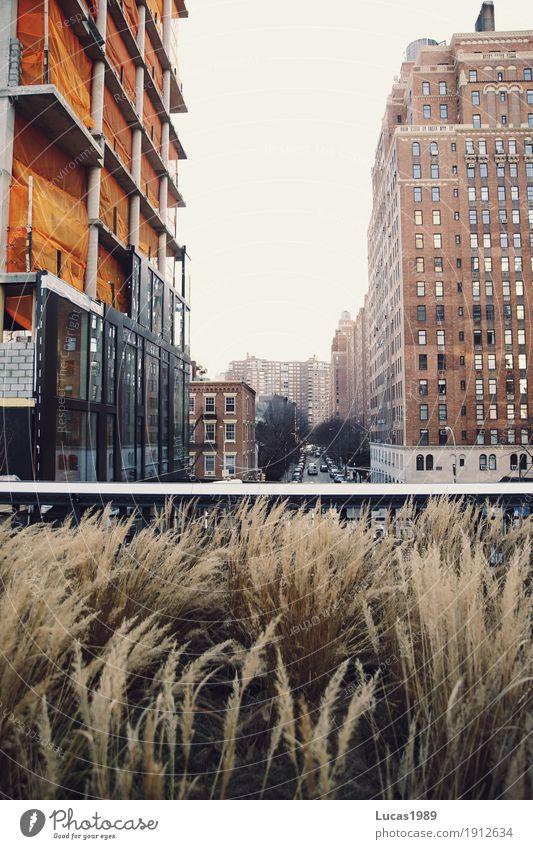 New York City - High Line Ferien & Urlaub & Reisen Tourismus Pflanze Gras Farn Grünpflanze Wildpflanze Manhattan Stadtzentrum Haus Hochhaus Baustelle hoch