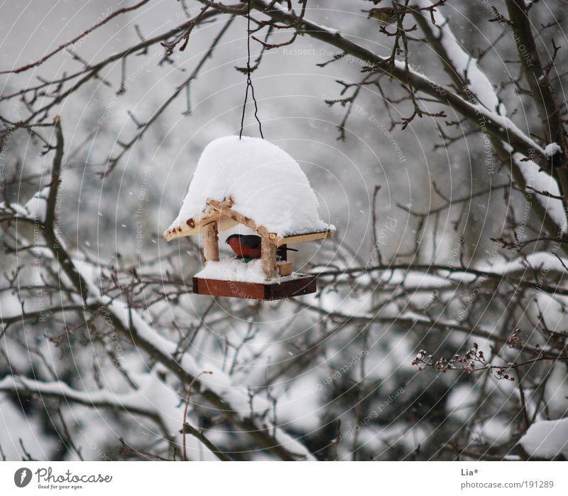 Dach überm Kopf Eis Frost Schnee Vogel 1 Tier hocken kalt Schutz Futterhäuschen Farbfoto Außenaufnahme Tag Kälteschutz Menschenleer
