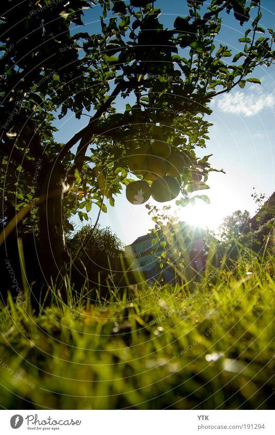 Sundown in Autumn Umwelt Natur Landschaft Pflanze Himmel Wolken Herbst Wetter Schönes Wetter Baum Gras Sträucher Blatt Stimmung Ferne Apfel Apfelbaum tief