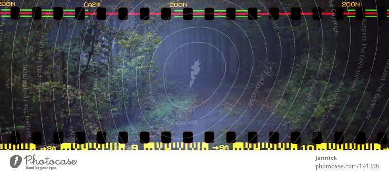 Hundsrück Sinnesorgane Erholung ruhig Berge u. Gebirge Natur Landschaft Pflanze Luft Herbst schlechtes Wetter Wind Nebel Regen Baum Gras Sträucher Blatt Wiese