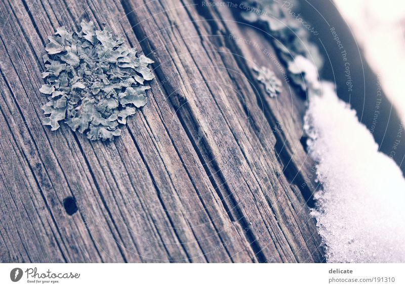 WoodnSnow Winter Eis Frost Schnee Holz blau braun grau weiß Gedeckte Farben Außenaufnahme Makroaufnahme Menschenleer