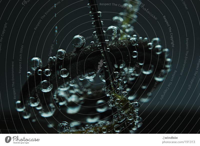 UTO - Unbekanntes Tauchobjekt Natur Wasser alt weiß ruhig schwarz Einsamkeit kalt Luft frei frisch Sicherheit neu Klima tauchen Flüssigkeit