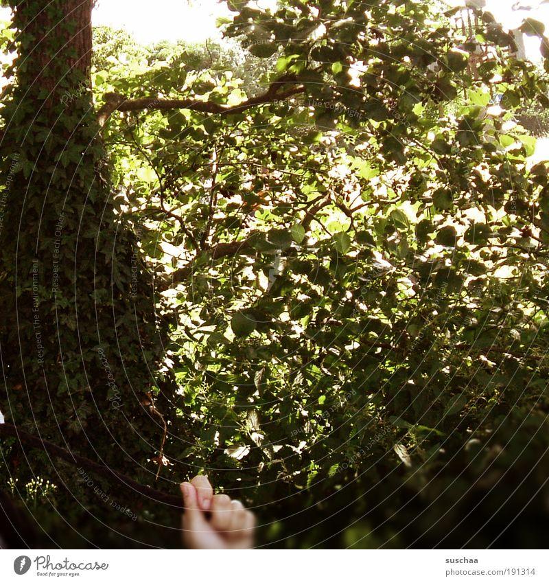 hand. am bildrand unten .. Natur Hand Baum Sommer Freude Blatt Freiheit Park Wärme Sträucher Ast festhalten Schnur Mütze Schönes Wetter Griff