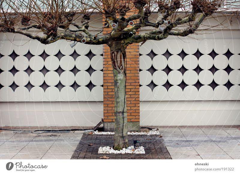 Vorgarten Natur Baum Stadt Pflanze Haus Wand Garten Mauer Gebäude Architektur Fassade Bauwerk Einfamilienhaus