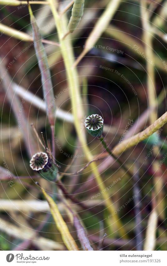 * Natur grün schön Pflanze ruhig Umwelt Zusammensein Feld wild natürlich Wachstum authentisch Idylle Vergänglichkeit violett trocken