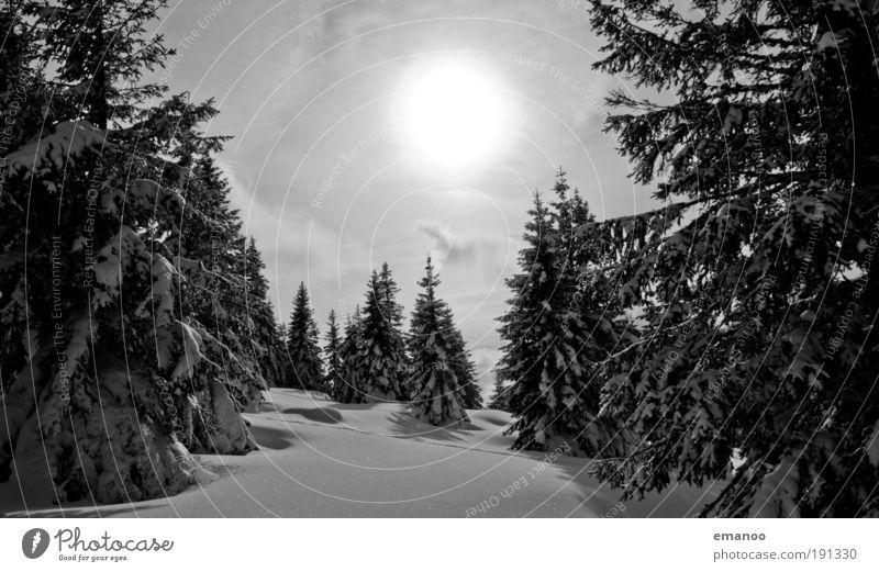 Winterwald Natur Ferien & Urlaub & Reisen Winter Wald Berge u. Gebirge natürlich Schnee Freiheit Wetter Eis Ausflug Klima Frost Schneebedeckte Gipfel Skier Tanne