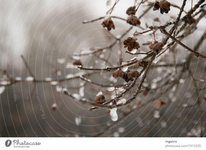 Eisiges Pfaffenhütchen Natur Pflanze Winter Frost Sträucher frieren hängen dehydrieren glänzend kalt natürlich trist trocken Glaube Trauer Religion & Glaube