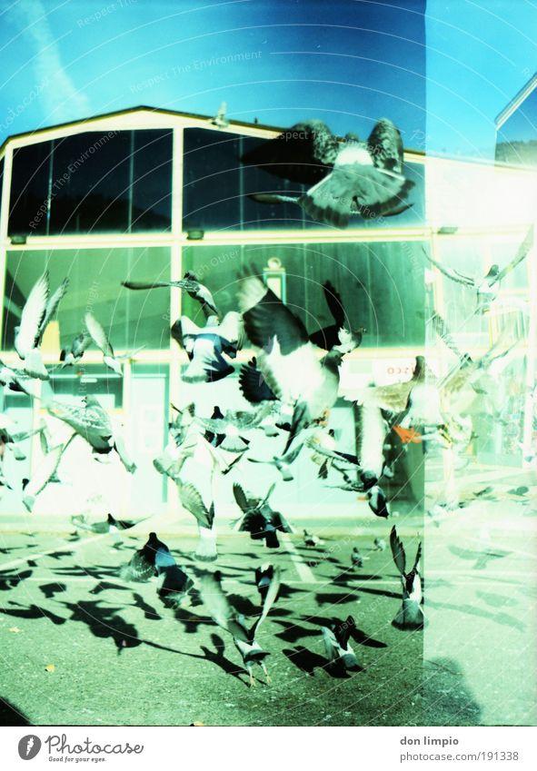 kawumm Haus Menschenleer Parkhaus Gebäude Haustier Wildtier Vogel Taube Bewegung fliegen frei blau grün Todesangst Cross Processing analog Mittelformat Schwarm