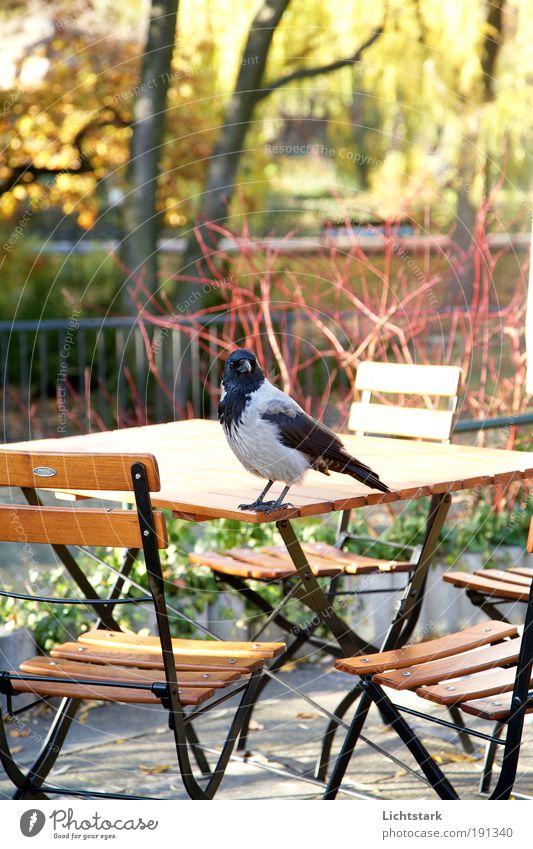 wird´s Natur Stadt Baum Tier schwarz kalt Umwelt Garten grau träumen Park Religion & Glaube Deutschland Vogel Wildtier Europa