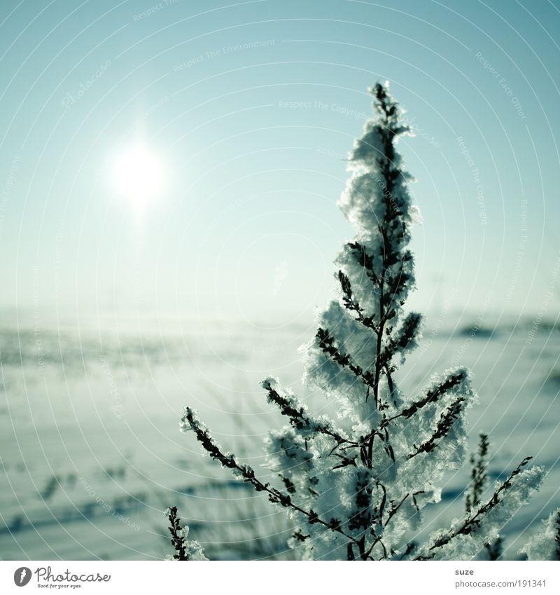 Wintersonne Natur blau schön Pflanze Sonne Einsamkeit Winter Landschaft Umwelt kalt Schnee Luft Horizont Eis natürlich authentisch