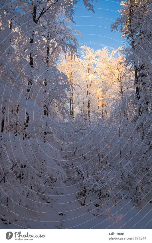 Sonne im Winterwald ruhig Schnee Natur Landschaft Baum Wald träumen kalt weiß Frost Jahreszeiten Waldlichtung Raureif Schneebaum Schneebäume Tiefschnee