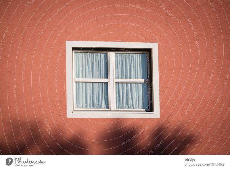 Blickdicht Schönes Wetter Fassade Fenster ästhetisch Freundlichkeit einzigartig positiv rosa rot Schutz Verschwiegenheit ruhig Einsamkeit